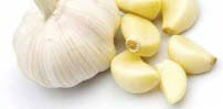 food_stores_edgekz_garlic